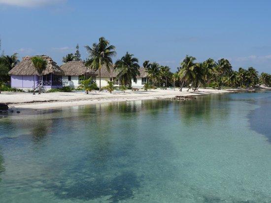 Blackbird Caye Resort: Blick vom Steg