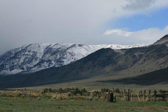 Rhojo's: Montañas de Burns