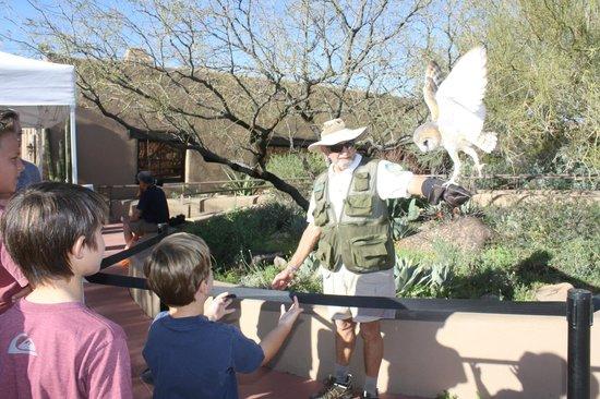 Arizona-Sonora Desert Museum: barn owl talk