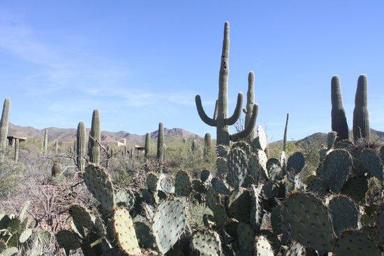 Arizona-Sonora Desert Museum: walking through the desert trail