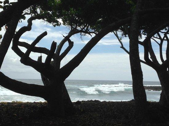 Hale Moana Bed & Breakfast : From a beach near by