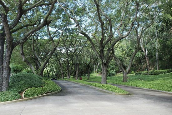 Kaua'i Marriott Resort : The driveway up to the resort