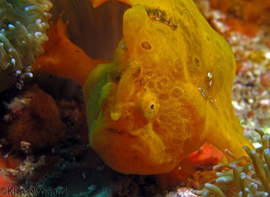 Liquid Adventure - Day Tours: Frogfish