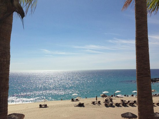 Hilton Los Cabos Beach & Golf Resort : Whale Watching