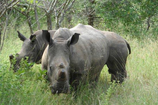 Bongani Mountain Lodge: rinoceronte