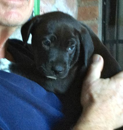 Hacienda Las Animas: Puppy headed for Canada