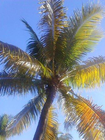 Sunshine Motel: LOVE PALM TREES