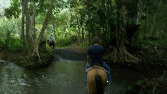 Waipi'o On Horseback: going through a creek