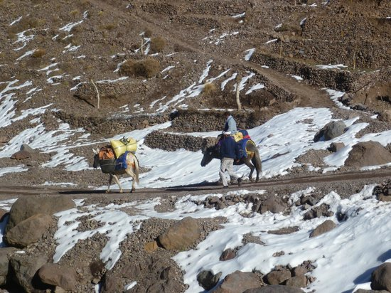 Toubkal Guide Day Tours: mule train
