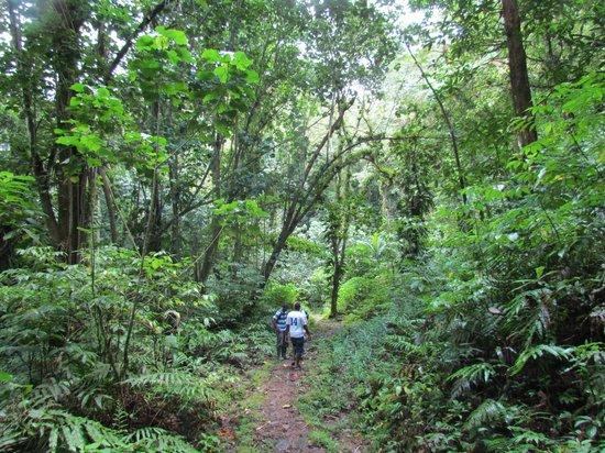 En Bas Saut Trail