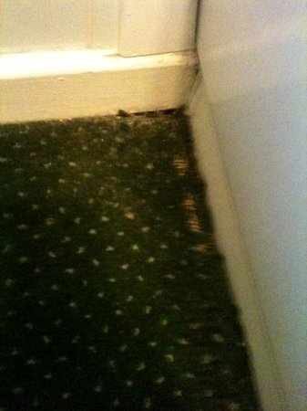 Chequers Inn: our bedroom carpet