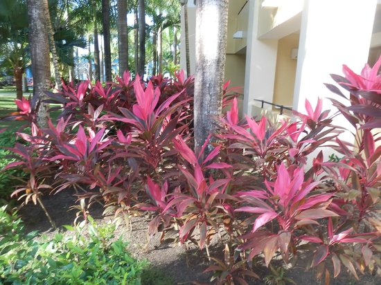 Iberostar Costa Dorada : Some of many of the tropical plants about the porperty
