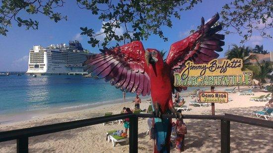 Jimmy Buffett's Margaritaville Ocho Rios: Scenic view of Ocho Rios Cruise Port
