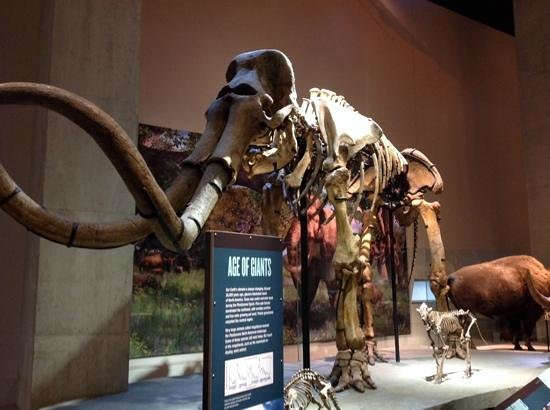 Perot Museum of Nature and Science: mamute