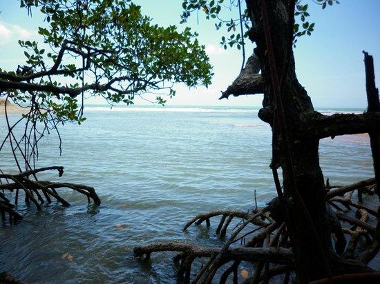 Rio da Barra Beach : El mar desde el manglar