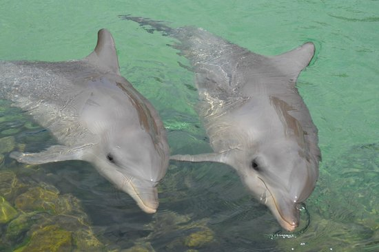 Sea World: dolphins in the nursery