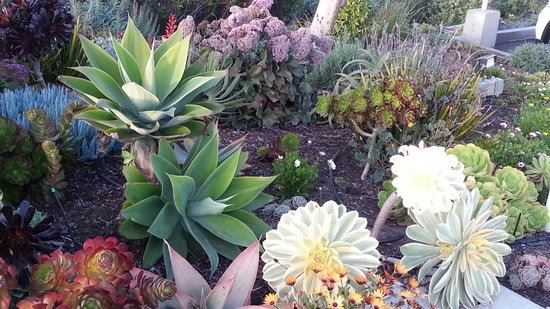 Pelican Inn & Suites: lush succulent gardens throughout the grounds