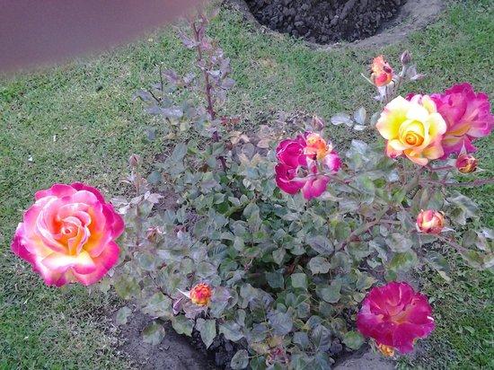 Hotel Ariel: rosales increibles