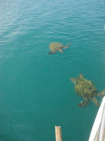 Isla de la Plata: tortugas