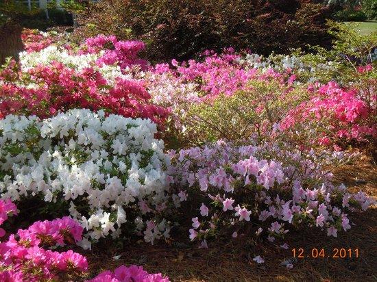 Brunswick Plantation Golf Resort: Le temps des fleurs