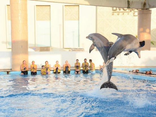 Interactive Aquarium : Шоу дельфинов