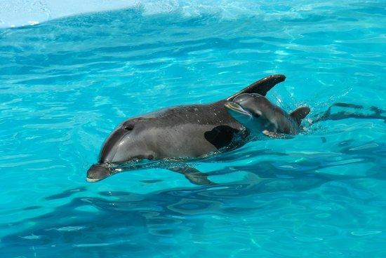 Interactive Aquarium : Плавание с дельфинами