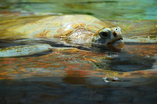 Interactive Aquarium : Обитатели акариума
