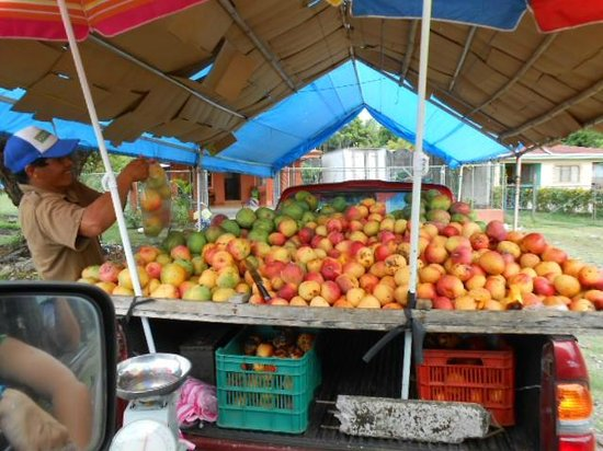 Hotel La Palapa Eco Lodge Resort : On the road selling mangos.