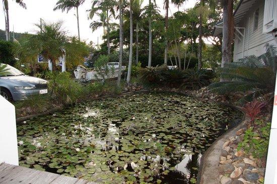 Best Western Mango House Resort: Lily Pond