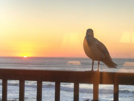 "The Sands Condominiums: ""Charlie"" the seagull comes to visit on the deck of Unit 6."