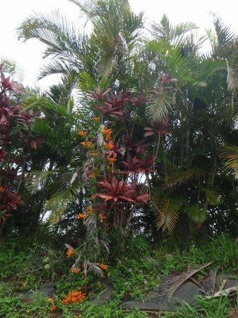 Haiku Cannery Inn B&B: Tropical foliage marking the boundary line of the property