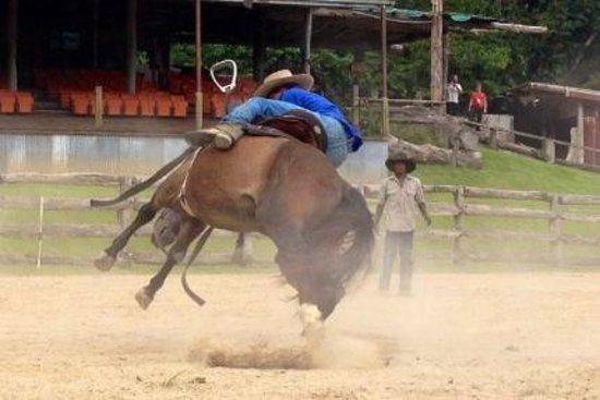 Australian Muster Experience: Breaking Horses