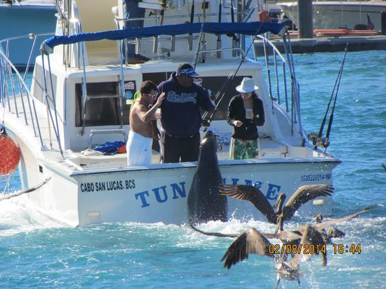 Hotel Riu Palace Cabo San Lucas: Seal hitching a ride and a fish