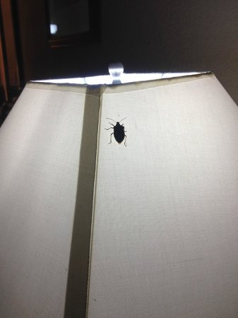 Quality Inn & Suites Coliseum: Bugs...