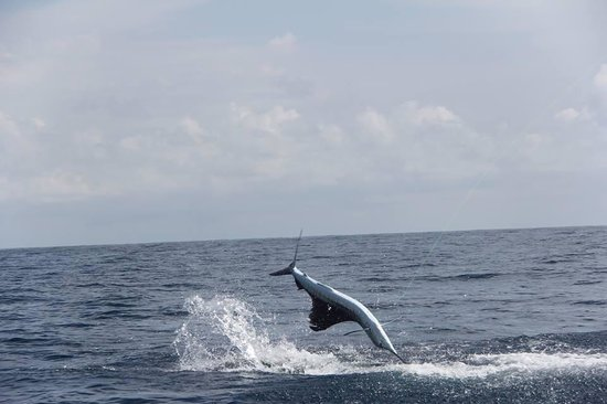 JP Sport Fishing Tours: awesome air