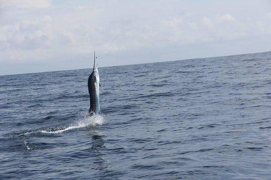 JP Sport Fishing Tours: tail walking