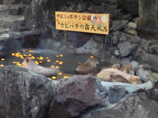 サボテン販売コーナー - Picture of Izu Shaboten Animal Park, Ito - TripAdvisor