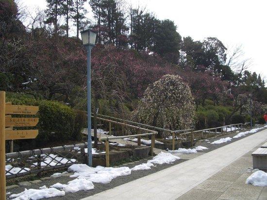Ikegami Baien: 池上梅園