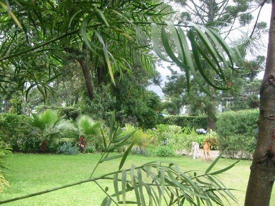 The Garden House : Guest annex garden