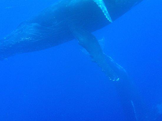 Captain Steve's Rafting: Amazing!!!