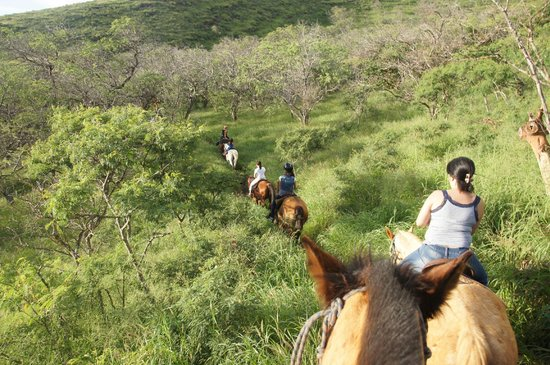 Lahaina Stables: Lush, Green Trail
