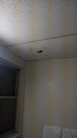 White House Inn on The Bay: mold in the bathroom
