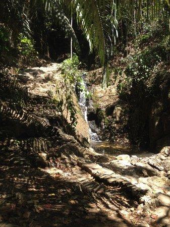Khao Phra Thaeo National Park: ton sai, waterfall ...
