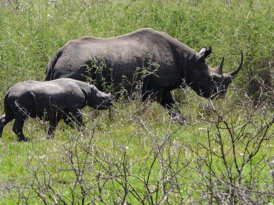 Serengeti Bushtops Camp: Mother & baby rhino