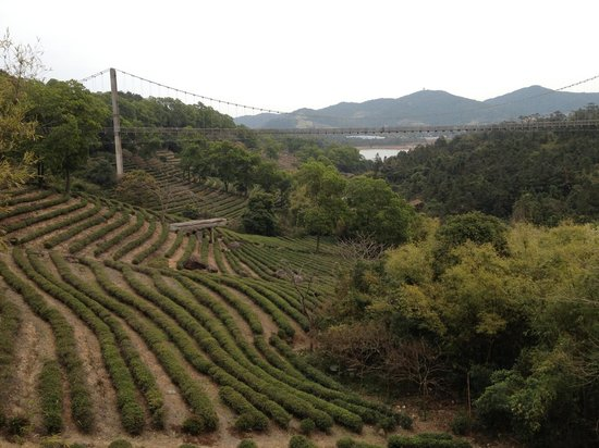 OCT East Shenzhen : OCT - Tea Valley