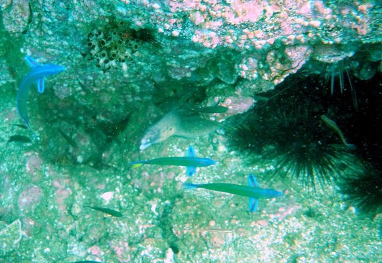 Le Meridien Al Aqah Beach Resort: Scuba diving