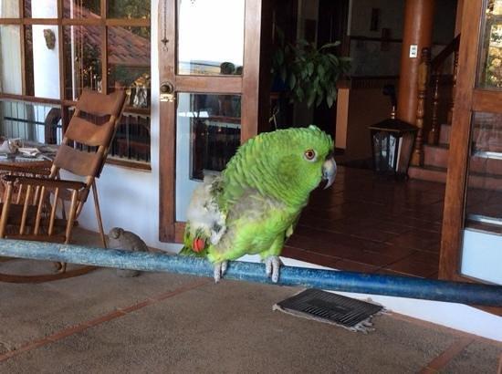 Hotel Villa Casa Blanca: Alice the hotel parrot