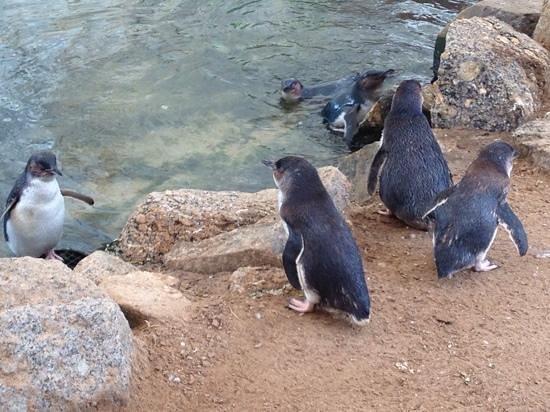 Penguin Centre: feeding time