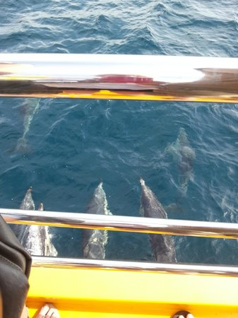 Dolphin Adventure: Dolphins playing