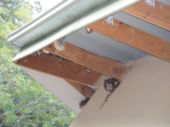 Gooderson Natal Spa Hot Springs & Leisure Resort: Bees nests